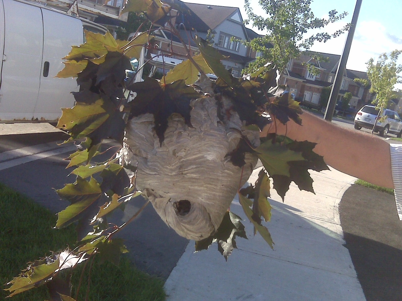 Wasps & Bees nest removal near me | GreenLeaf Pest Control